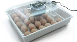 Как выбрать инкубатор для домашнего пользования?