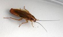 Как избавиться от тараканов в доме