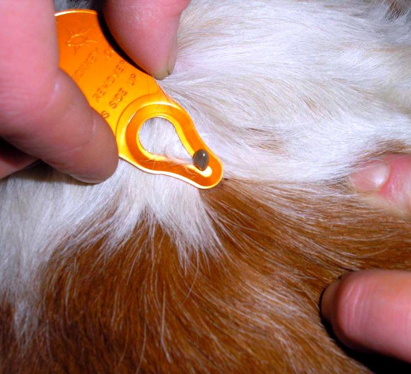 Какие бывают болезни у животных и как их лечить